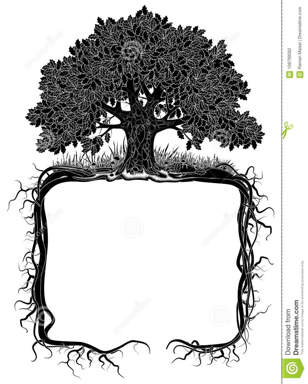 Oak Tree With Roots Frame Stock Vector Illustration Of