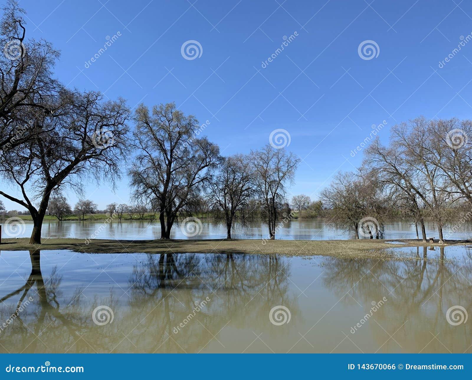 Oak tree by Sacramento River -1
