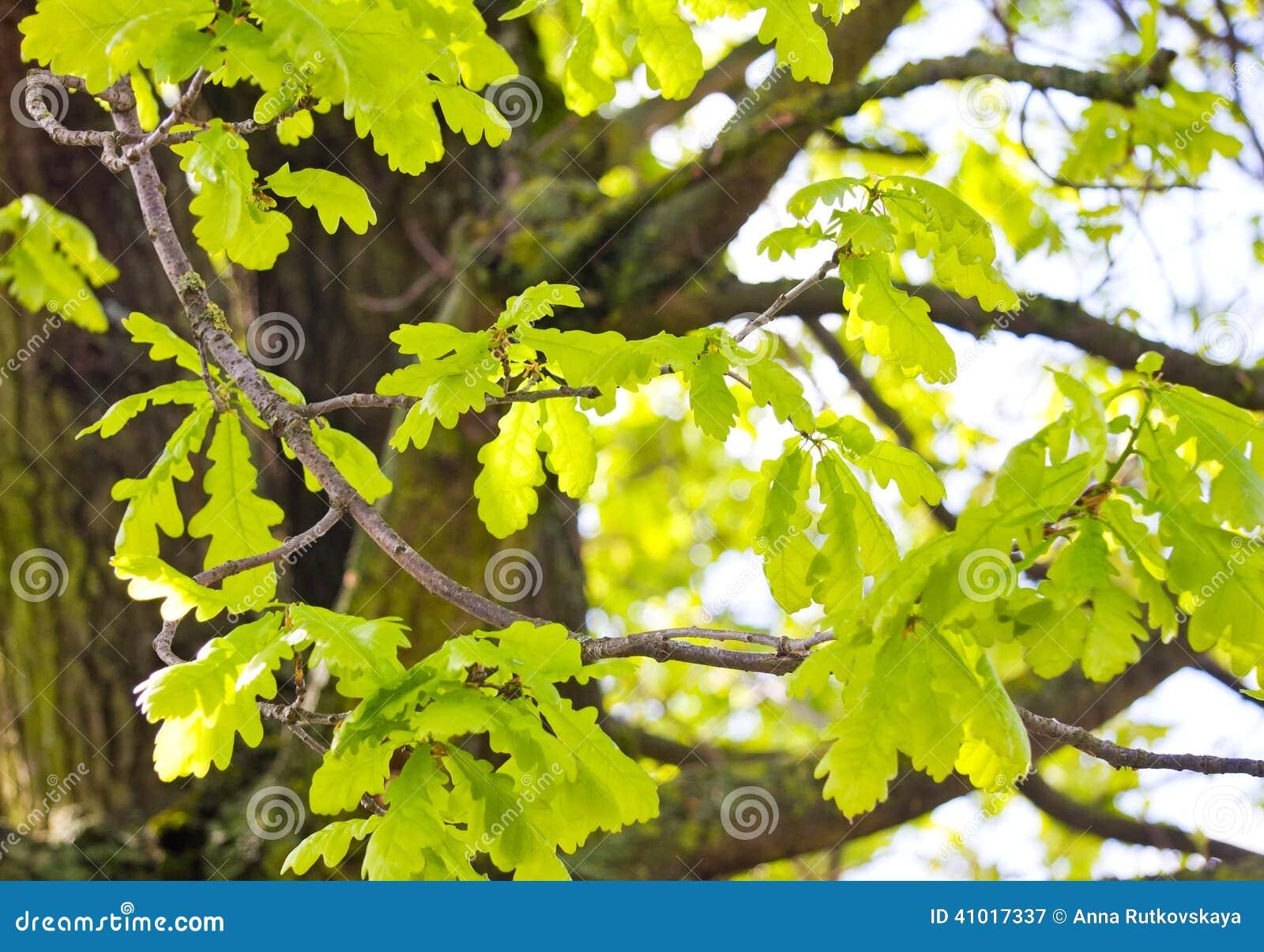 Enchanting Tree Coloring Vignette - Coloring Page - senderolasbrumas ...