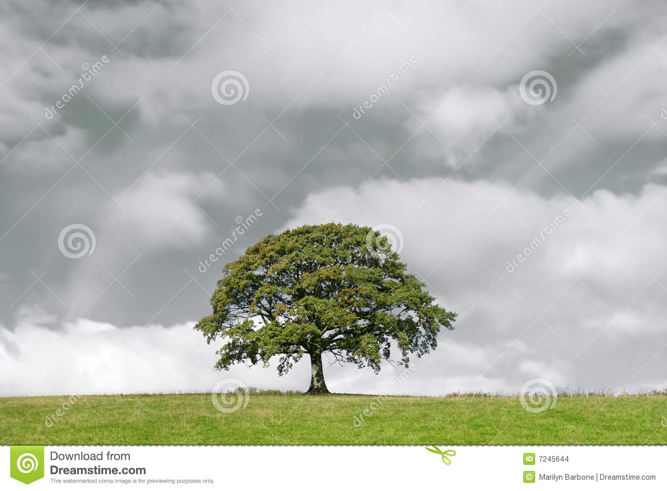 oak tree and storm clouds stock photo  image of emptiness