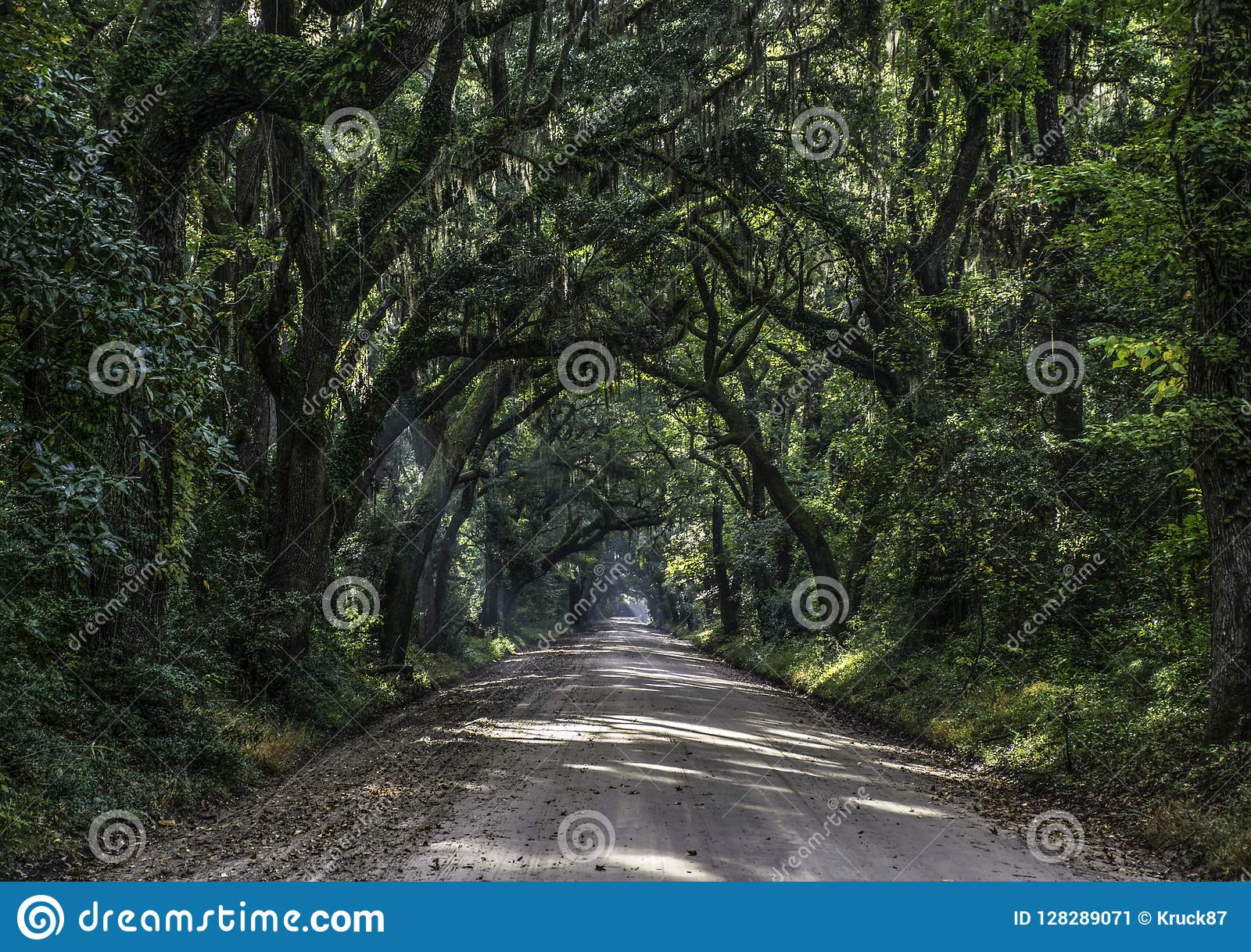 Oak Tree Tunnel Road to Botany Bay Plantation in Editso Island S