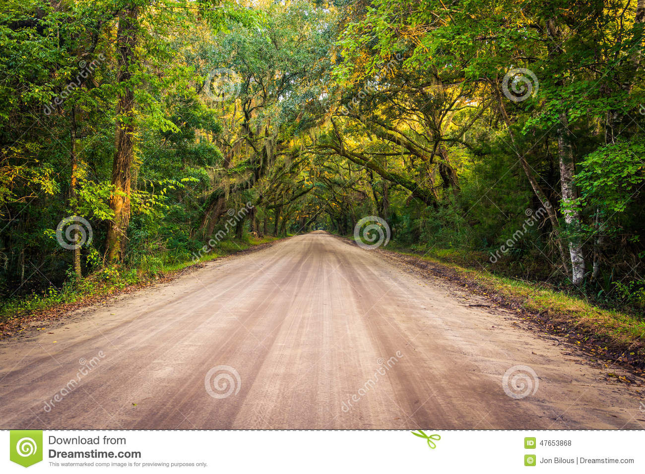 Oak Trees Along The Dirt Road To Botany Bay Plantation On