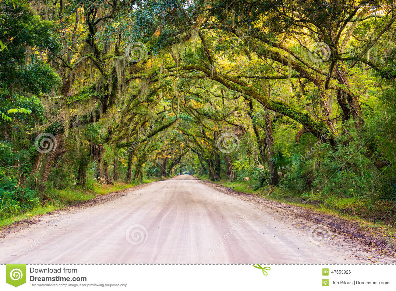 Oak trees along the dirt road to Botany Bay Plantation on Edisto Island,  South Carolina
