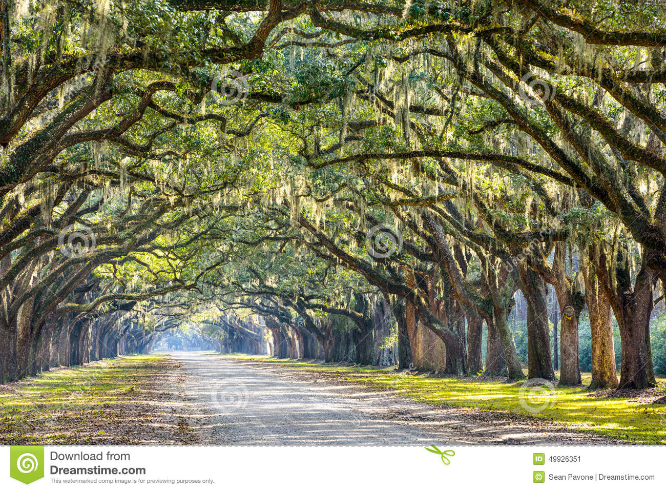Savannah, Georgia, USA oak tree lined road at historic Wormsloe ...