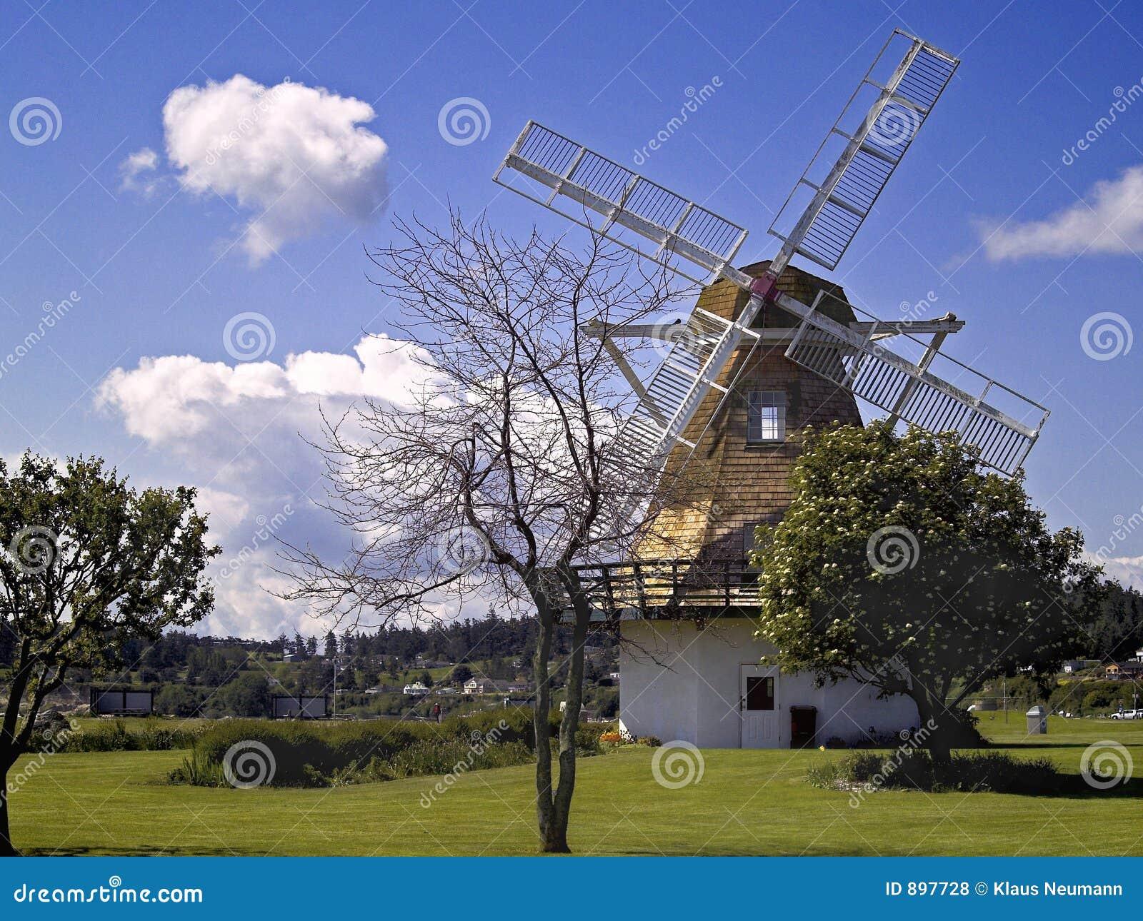 Oak windmill schronienia
