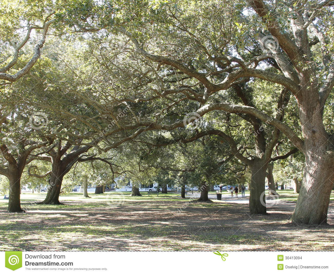 Oaks At The Battery Stock Images Image 30413094
