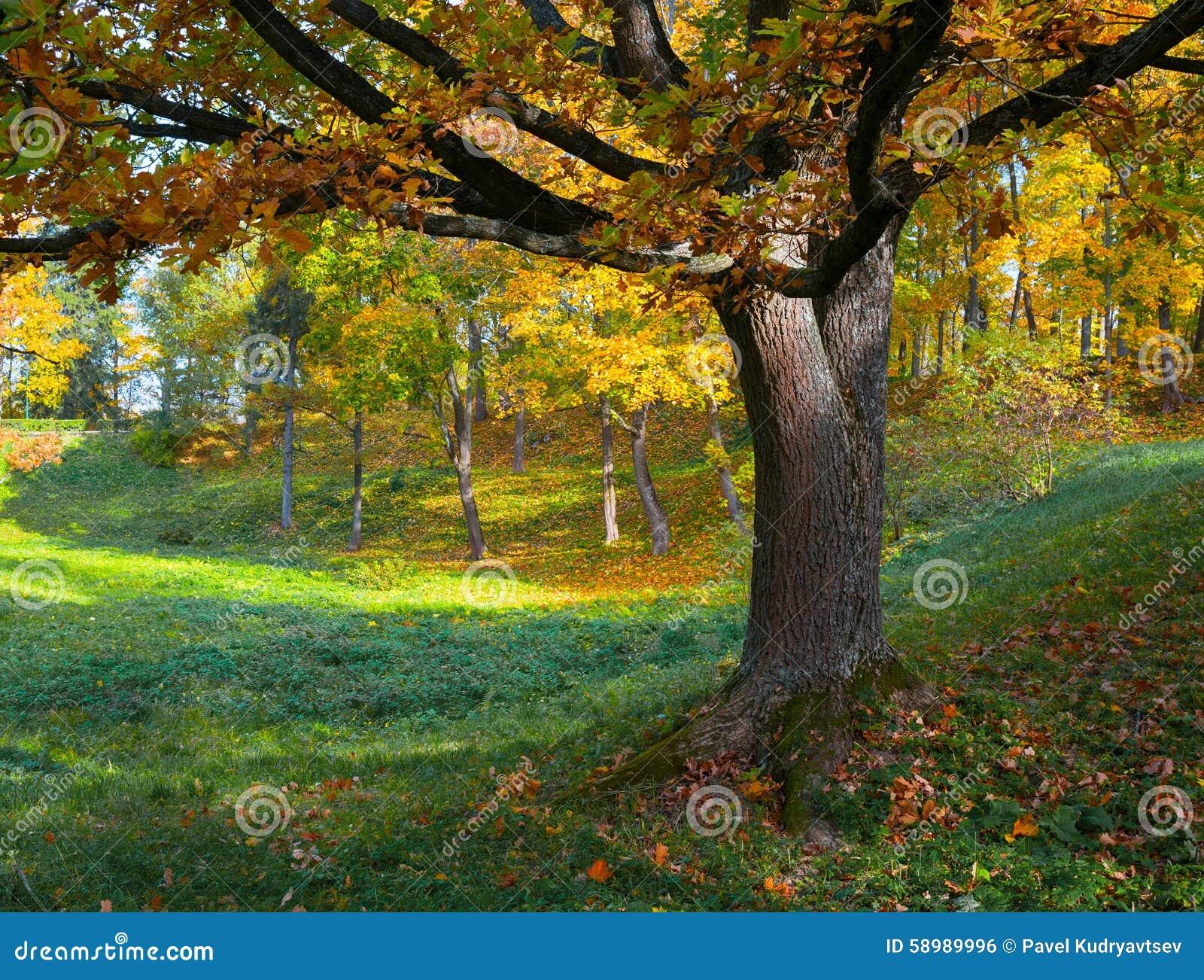Oaktree i fall