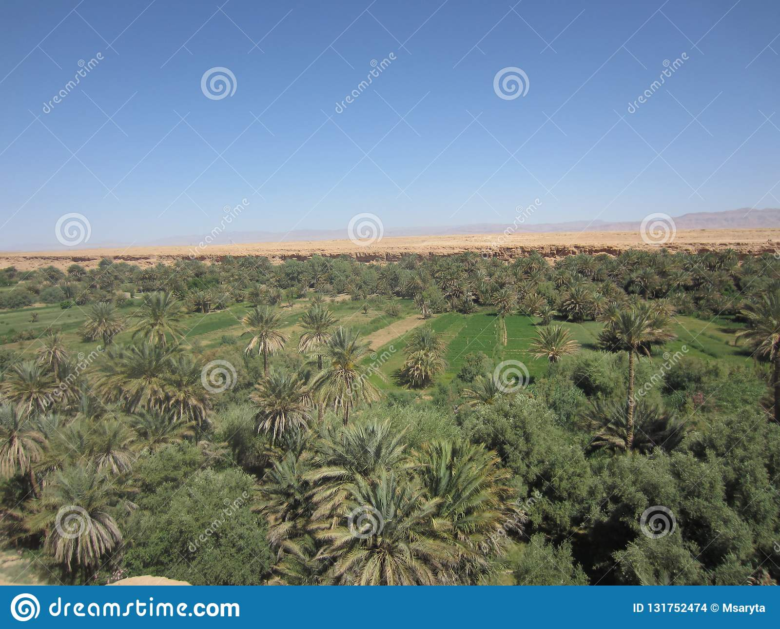 the oasis of elrrachidia in morocco