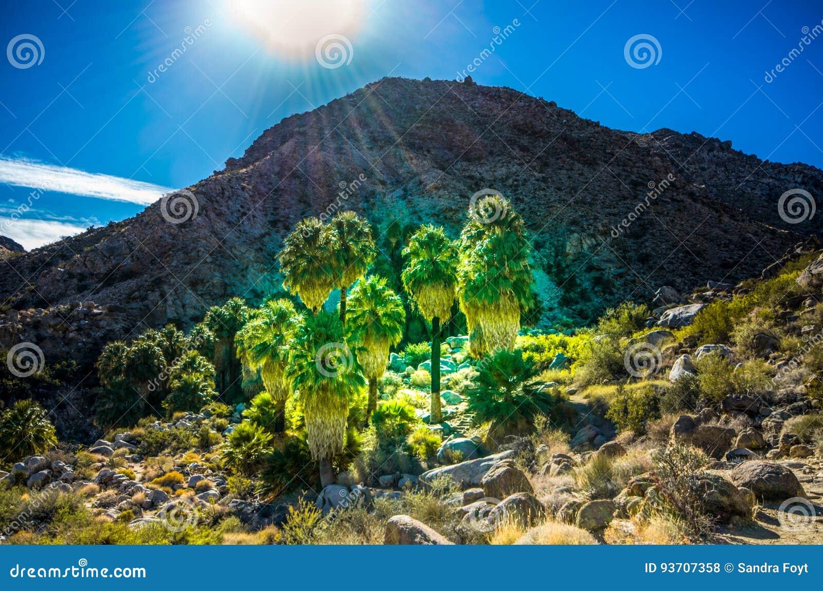 Oasis of Hope - Joshua Tree National Park - California