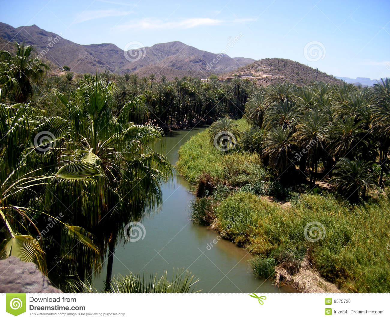 Oasis In Mulege Baja California Stock Photo Image 9575720