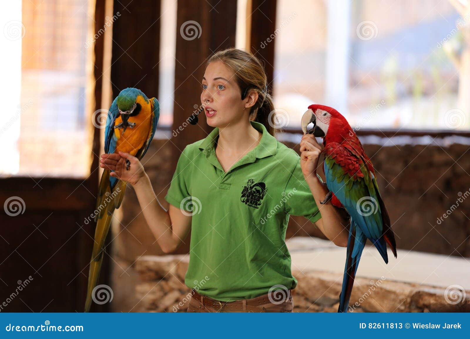Oasis Park - Parrots Live Show. Women Holding The Big Parrot ... 69c7c873d1
