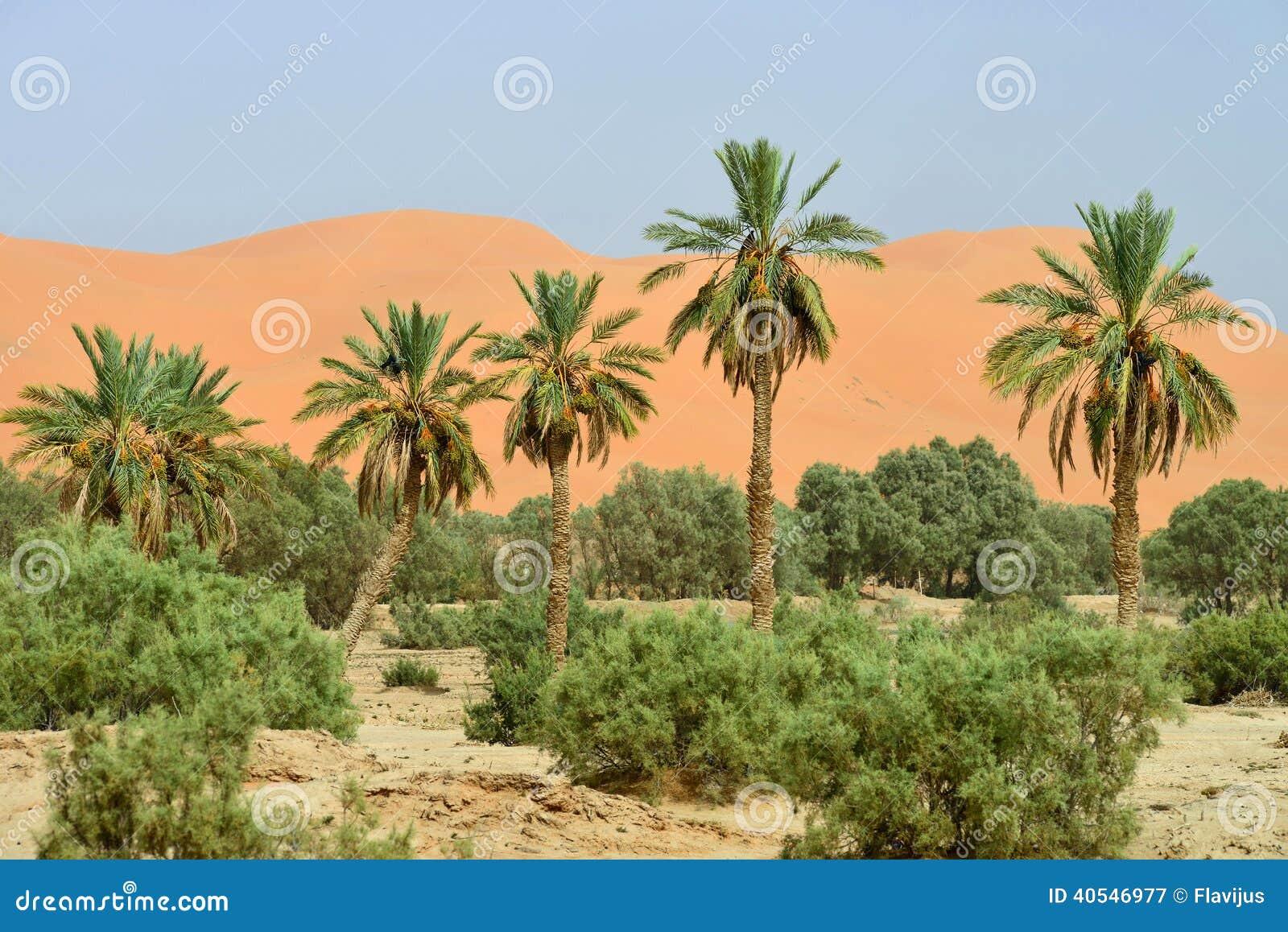Sahara - Wikipedia