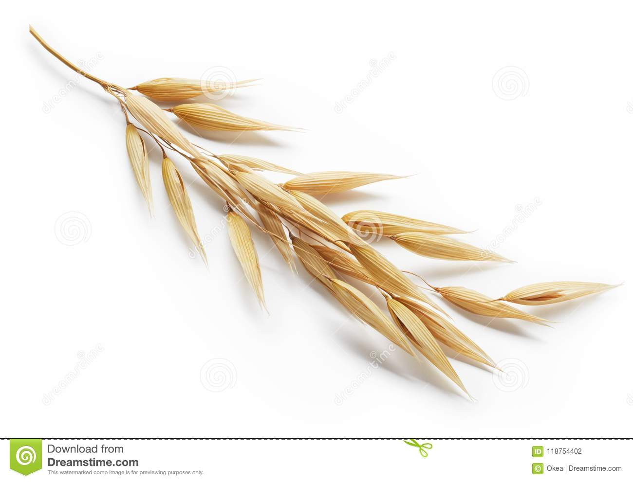 Download Oat plant stock photo. Image of macro, close, background - 118754402