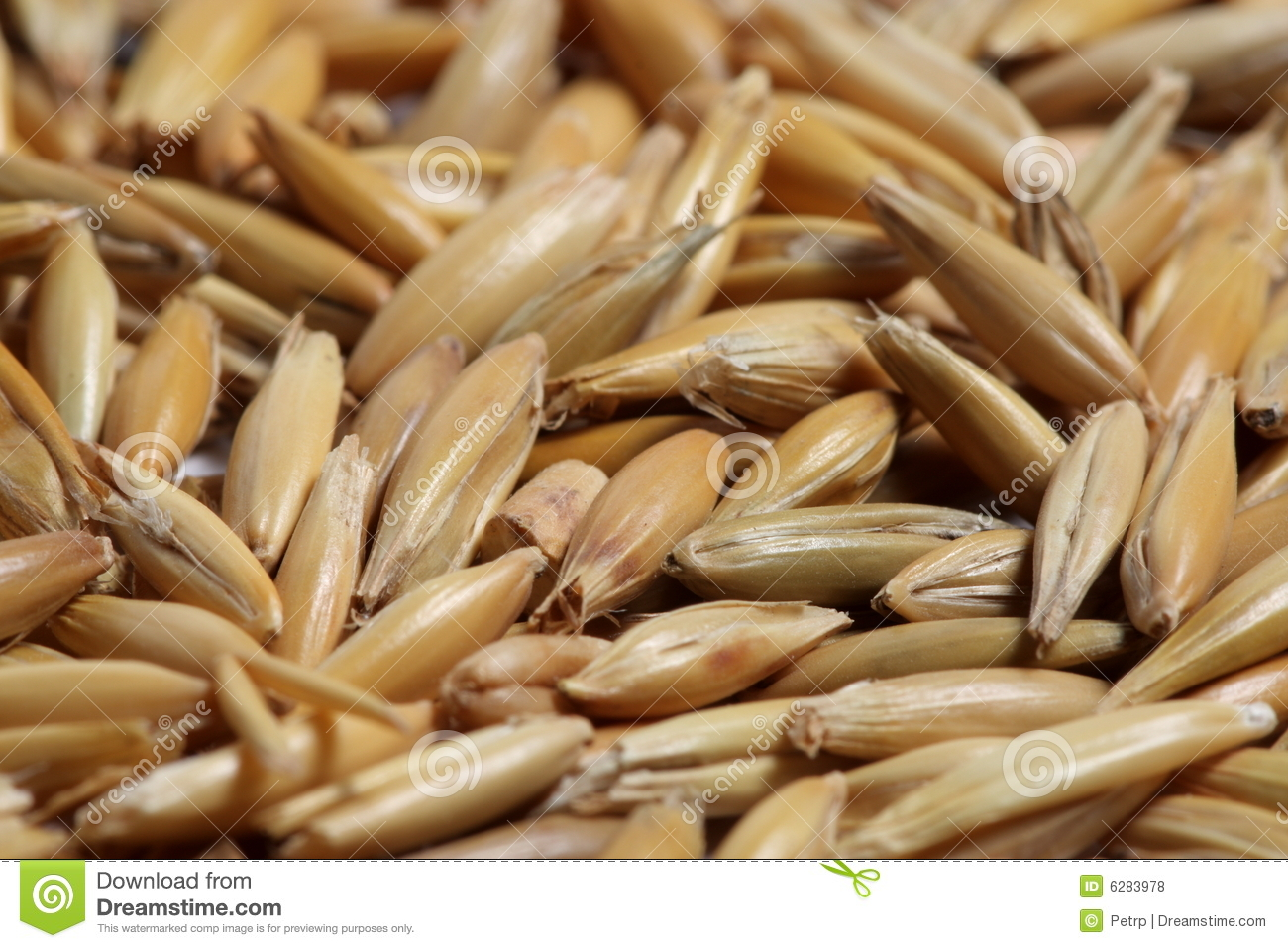 Oat Seed Close-up Royalty Free Stock Photos - Image: 6283978
