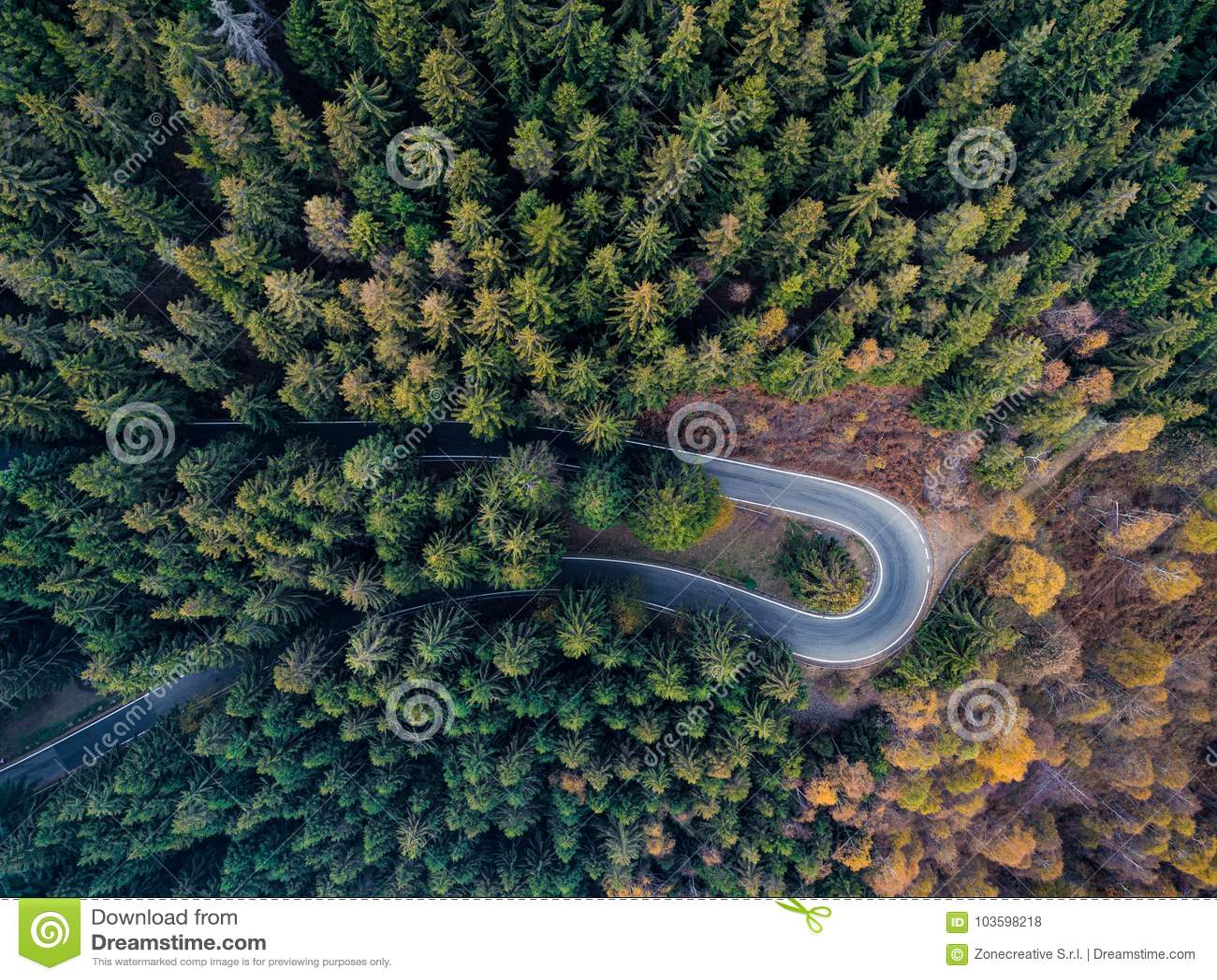 Obenliegende von der Luftdraufsicht über Haarnadeldrehungs-Straßenbiegung in Landschaftsherbst-Kiefer forestFall orange, grüner,