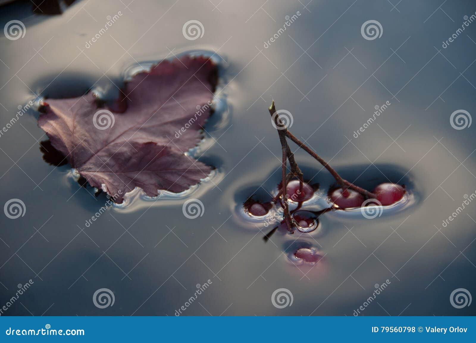 Oberflächenspannung, die Beeren sinken in Wasser