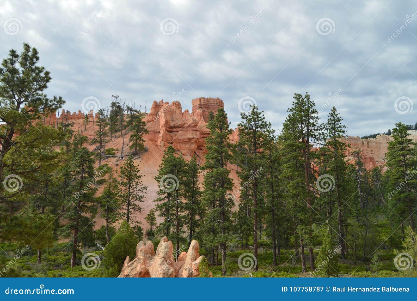 Obfitolistni lasy sosny I jodły W Bryka jaru formacjach Hodes geom