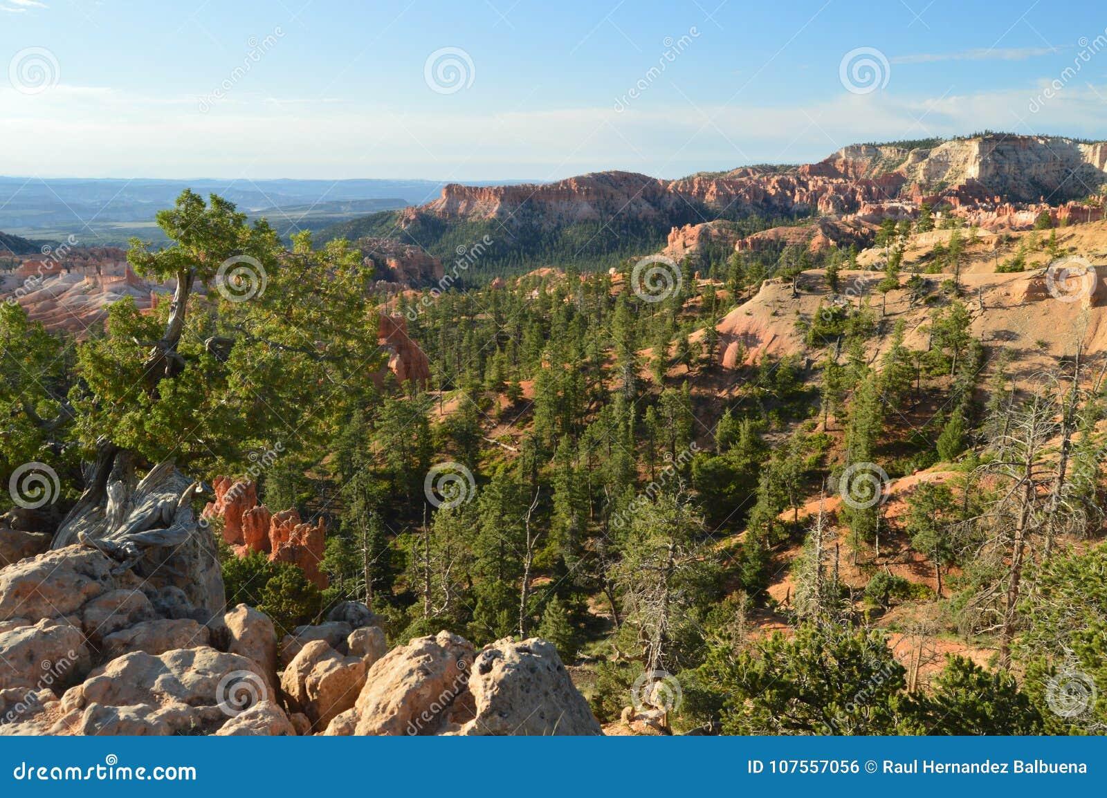 Obfitolistni lasy sosny I jodły W Bryka jaru formacjach Hodes geom Podróż Natura