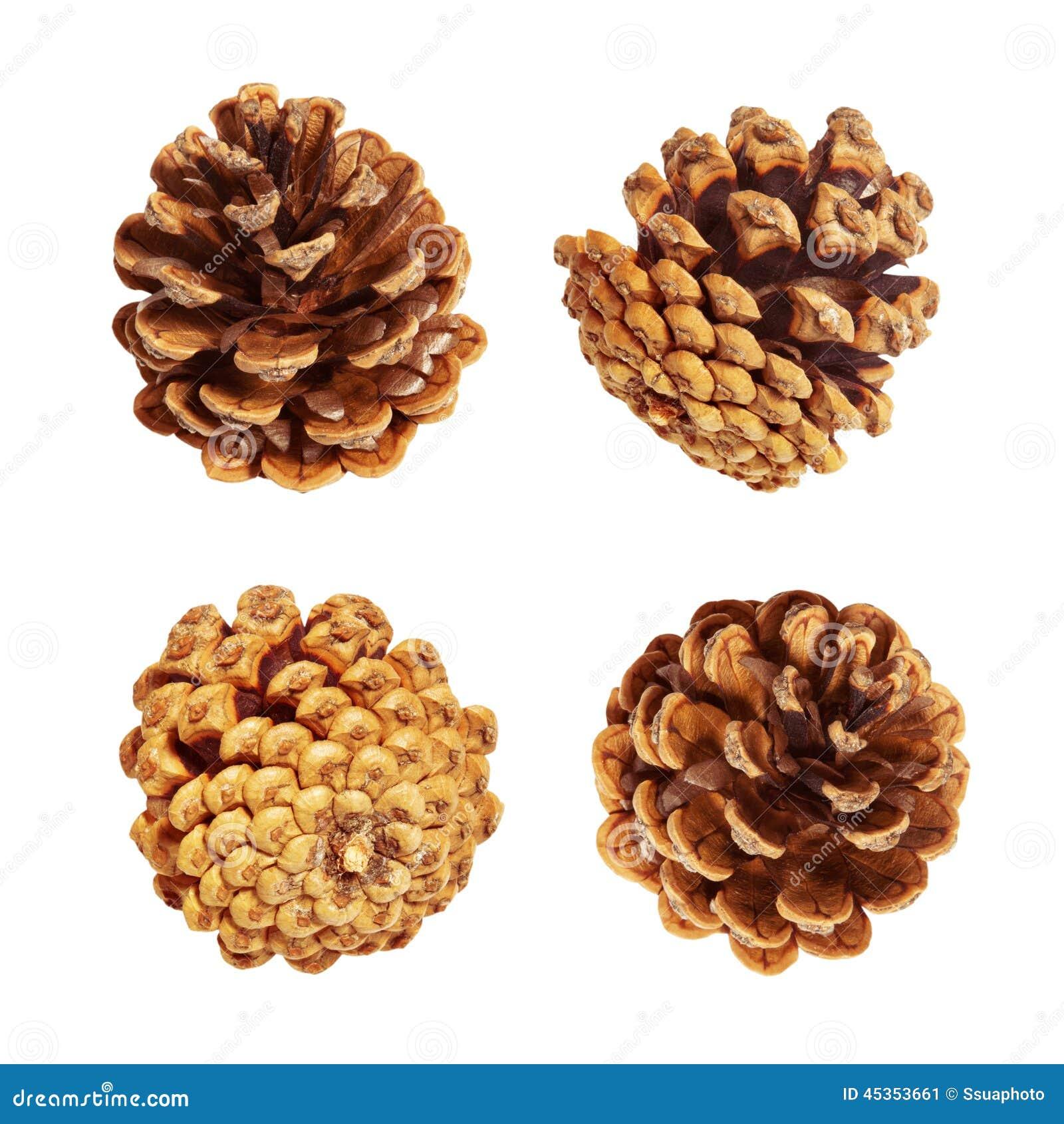Objet du pin Cones