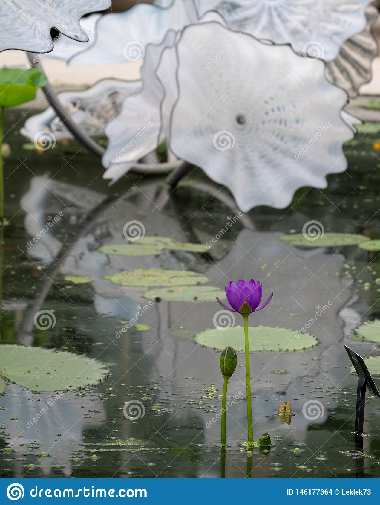 Objeto expuesto del artista de cristal Dale Chihuly en la casa en los jardines de Kew, Richmond, Londres, Reino Unido de Waterlil