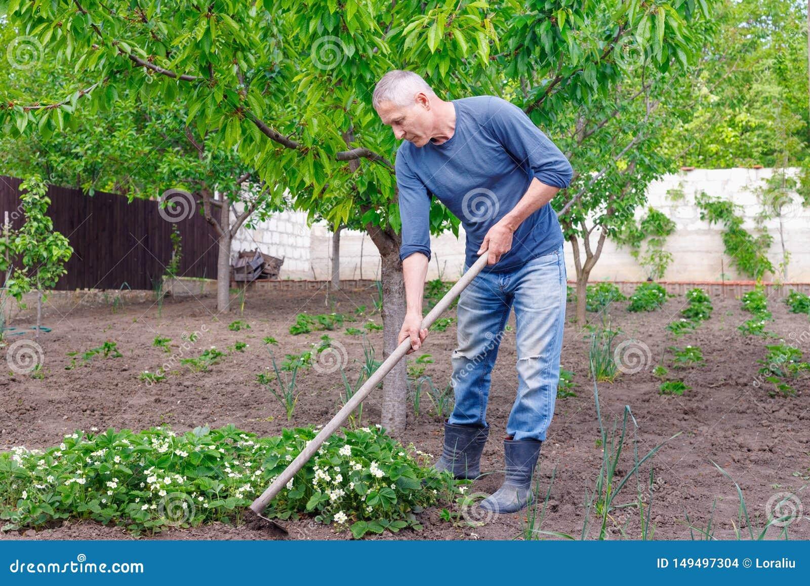 Obsługuje średniorolną czułość dla zasadzać truskawki z narzędziami outdoors