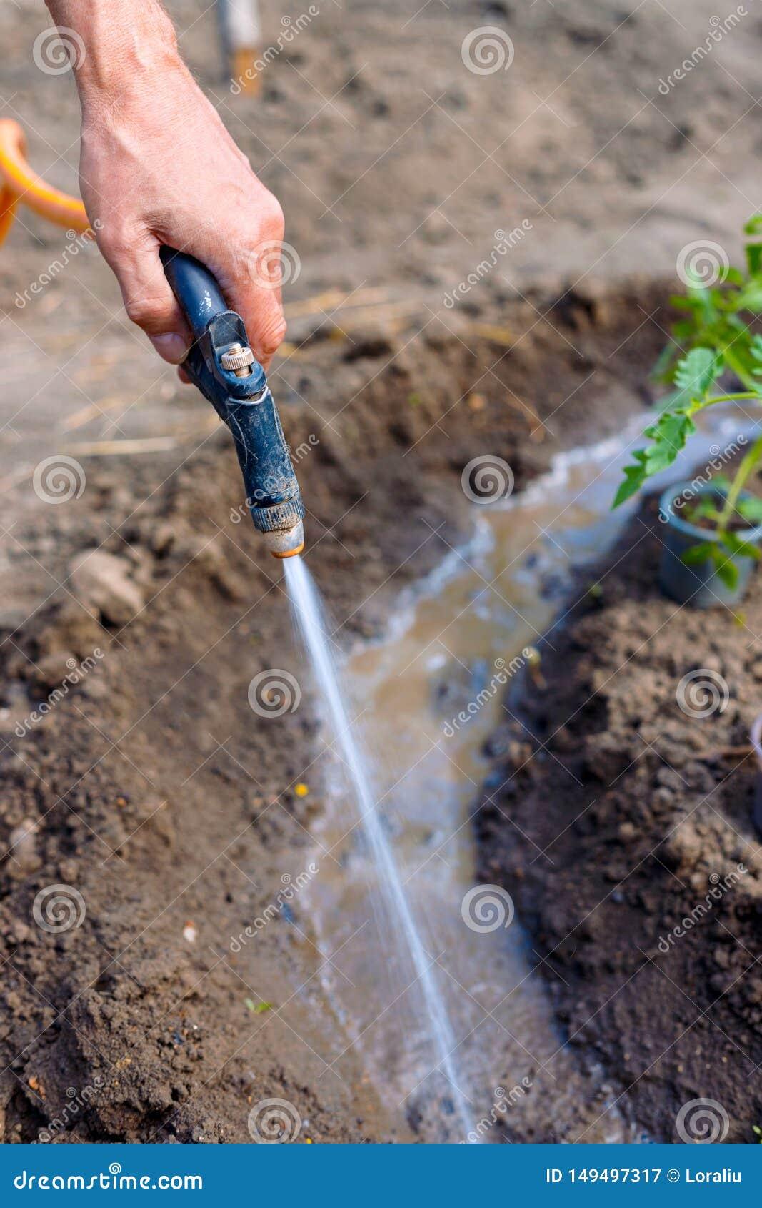 Obsługuje średniorolnych podlewanie pomidory i pieprzy rozsady w ogródzie outdoors
