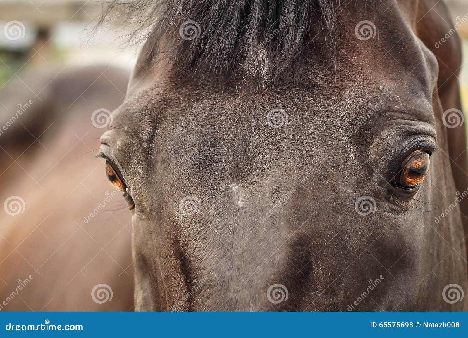 Observação do cavalo de Brown