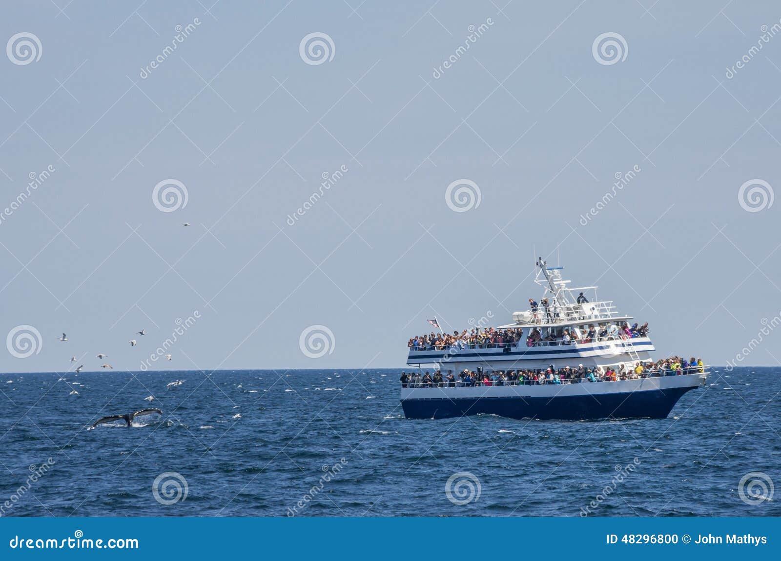 Observateurs et mouettes de baleine