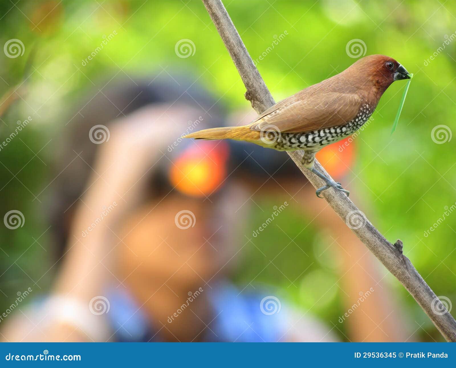Observation d oiseau