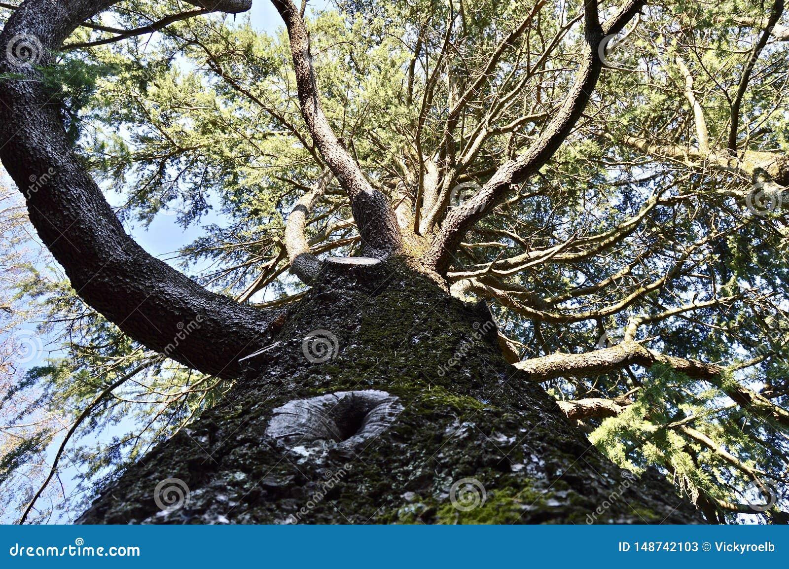 Obserwowa? pe?no?? natura od drzewa