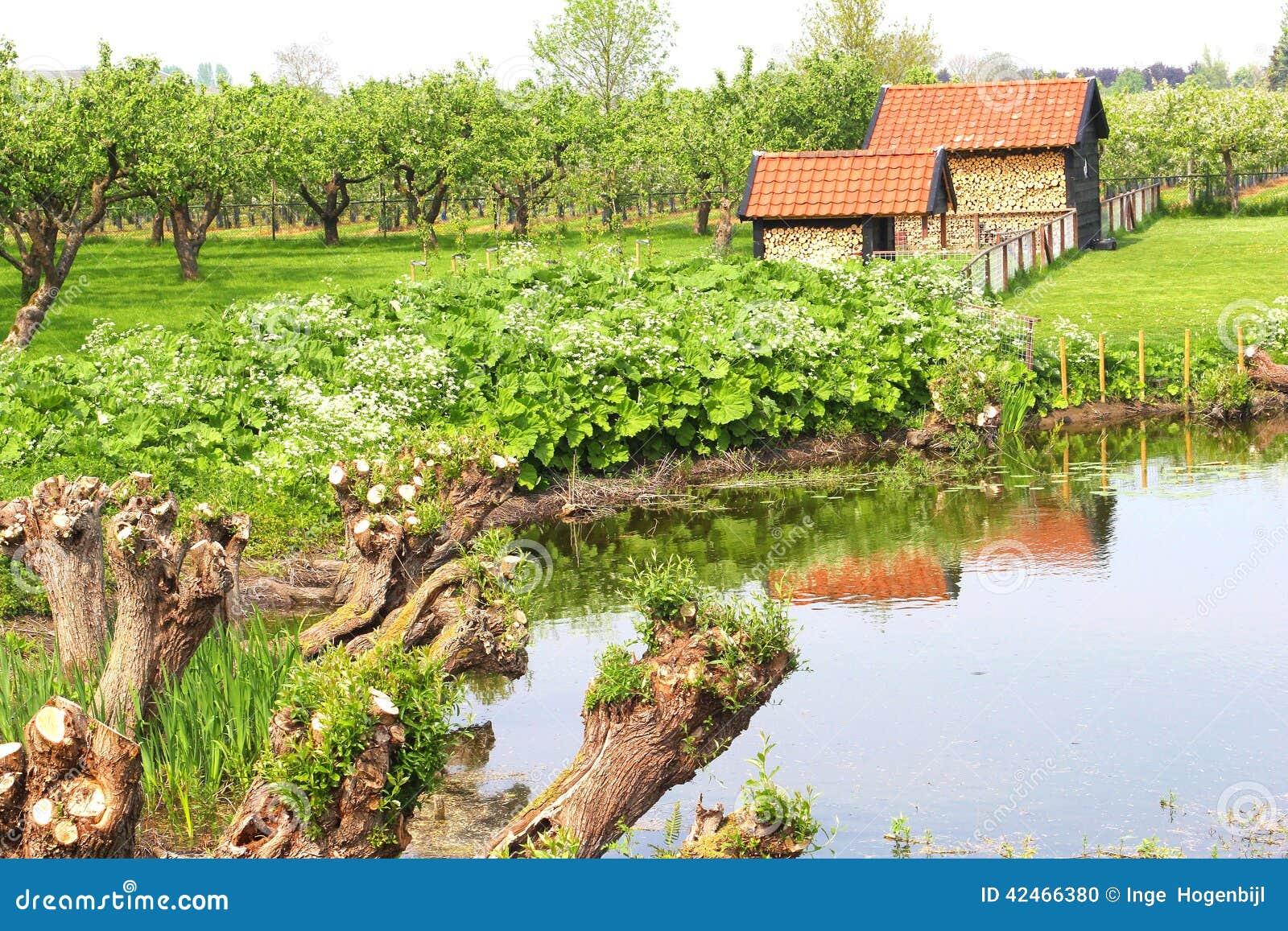 Obstgarten mit Obstbäumen, die Niederlande