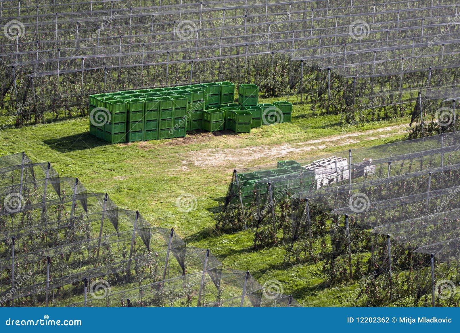Obstgarten und Rahmen