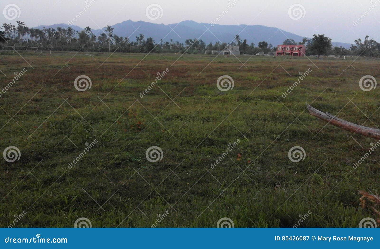 Obszar trawiasty i góra