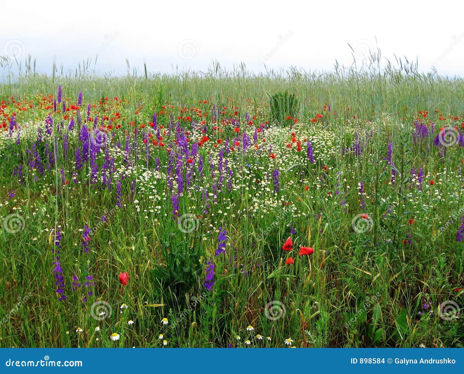 Obszar trawiasty kwiaty