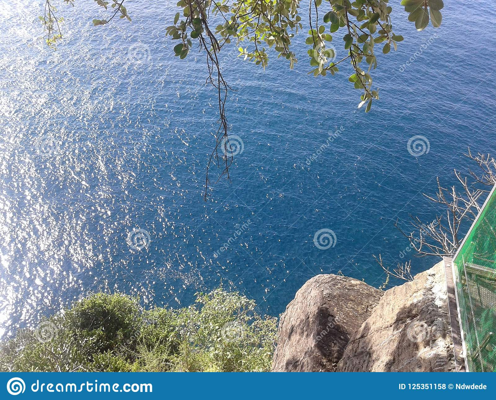 Océan bleu frais sous l arbre