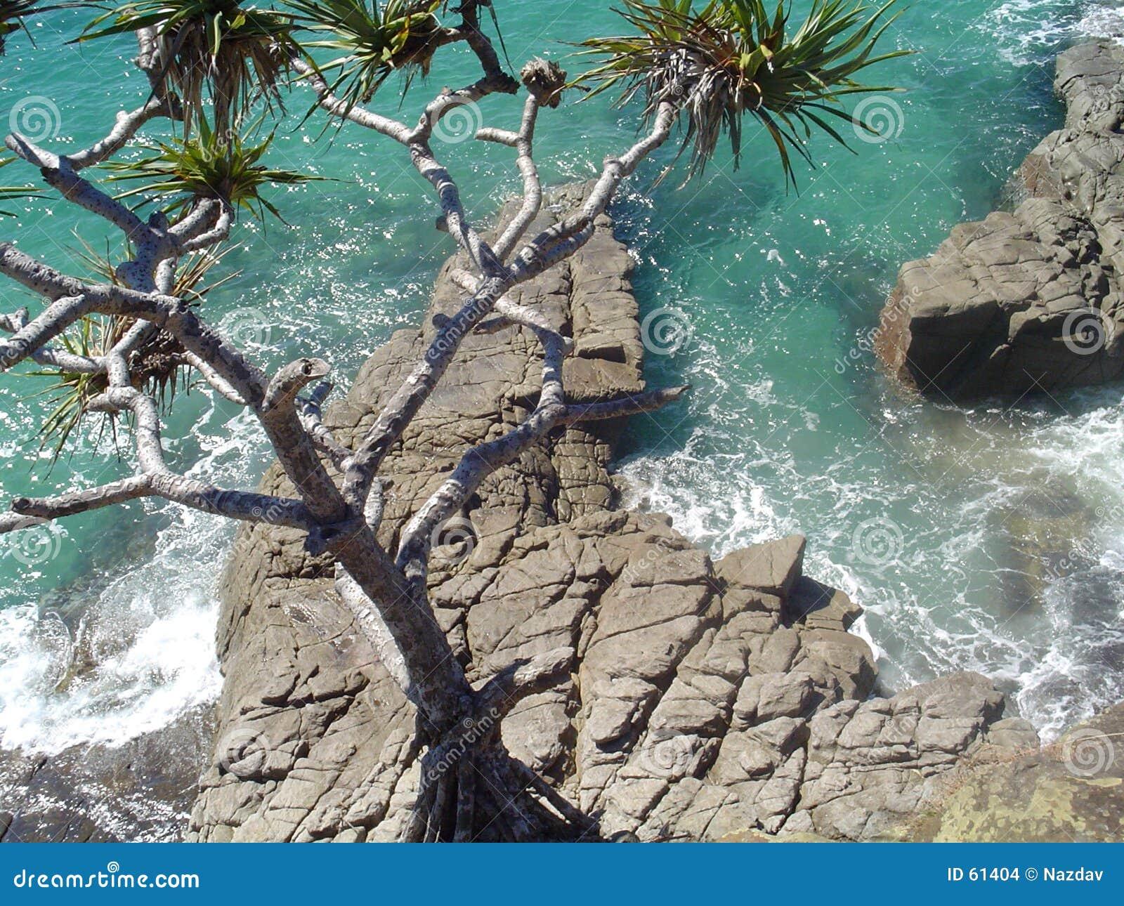Download Océan chez Noosa photo stock. Image du australie, ondes - 61404