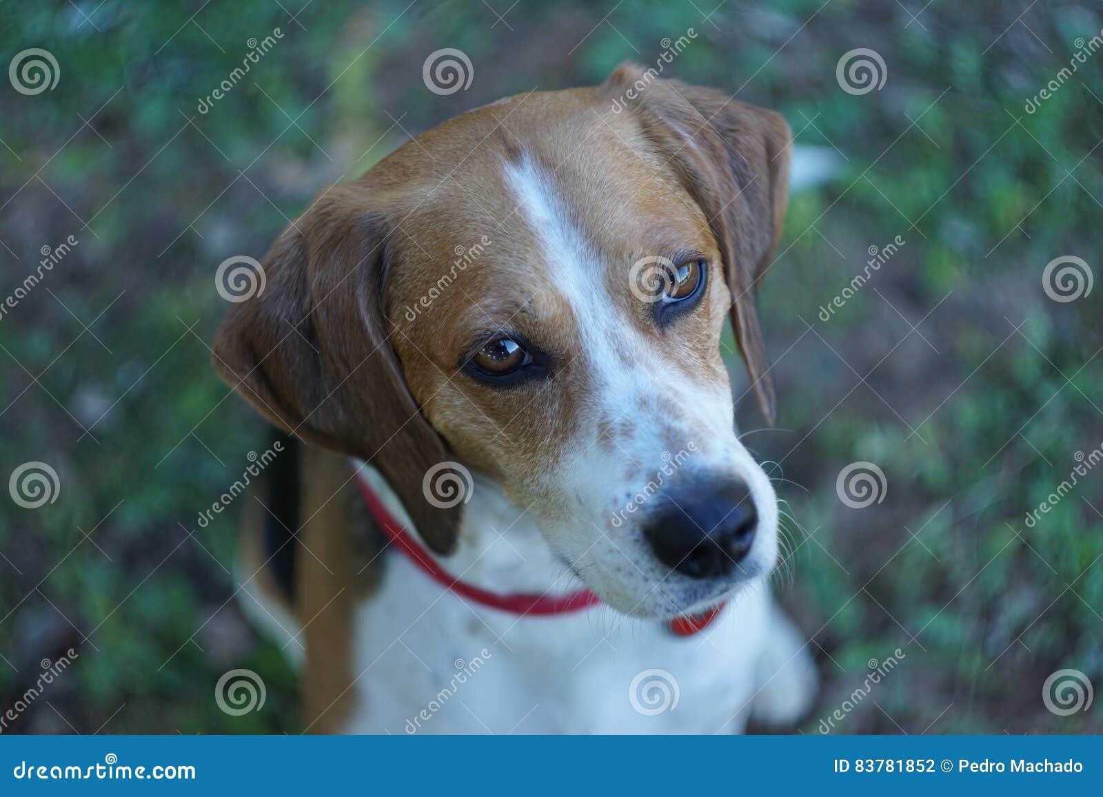 Occhi Dolci Dell Animale Domestico Miscela Del Cane Da