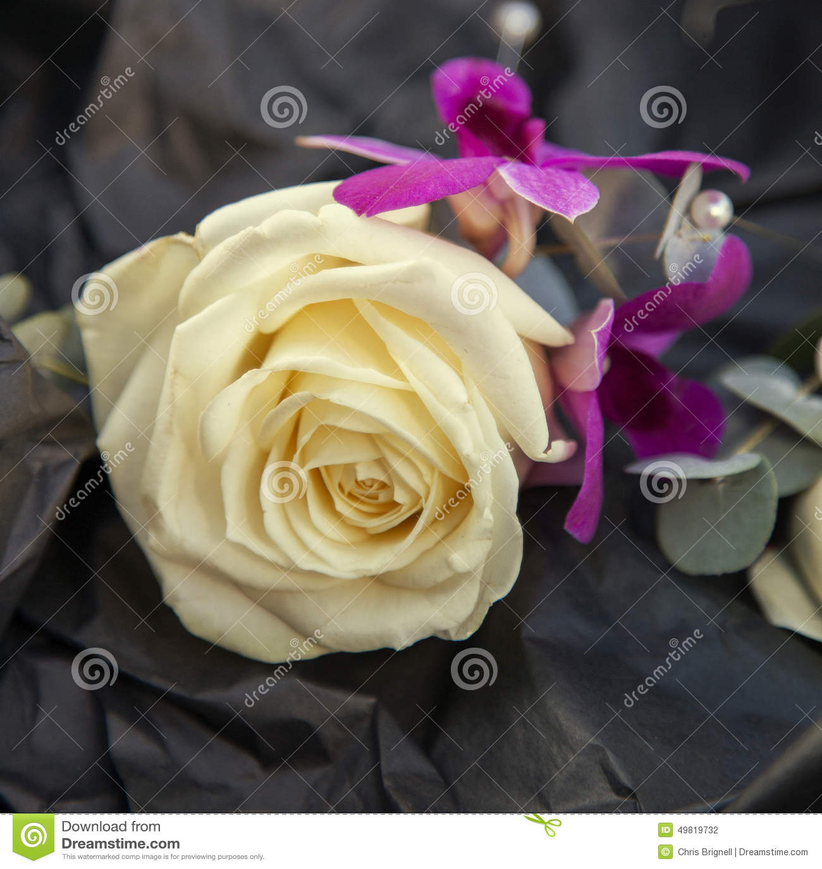 Occhiello rosa di nozze dell avorio