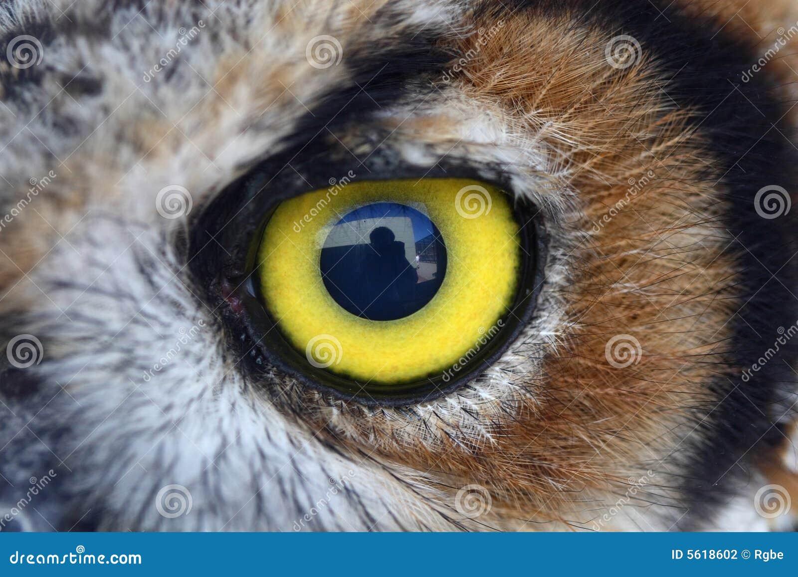 Occhio del gufo