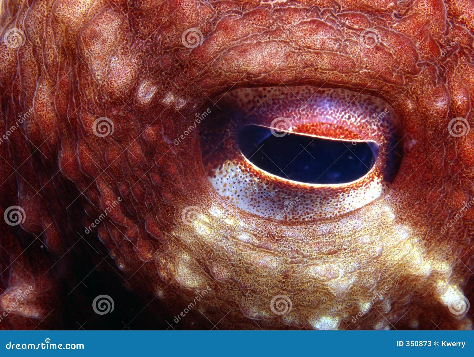 Occhio del polipo
