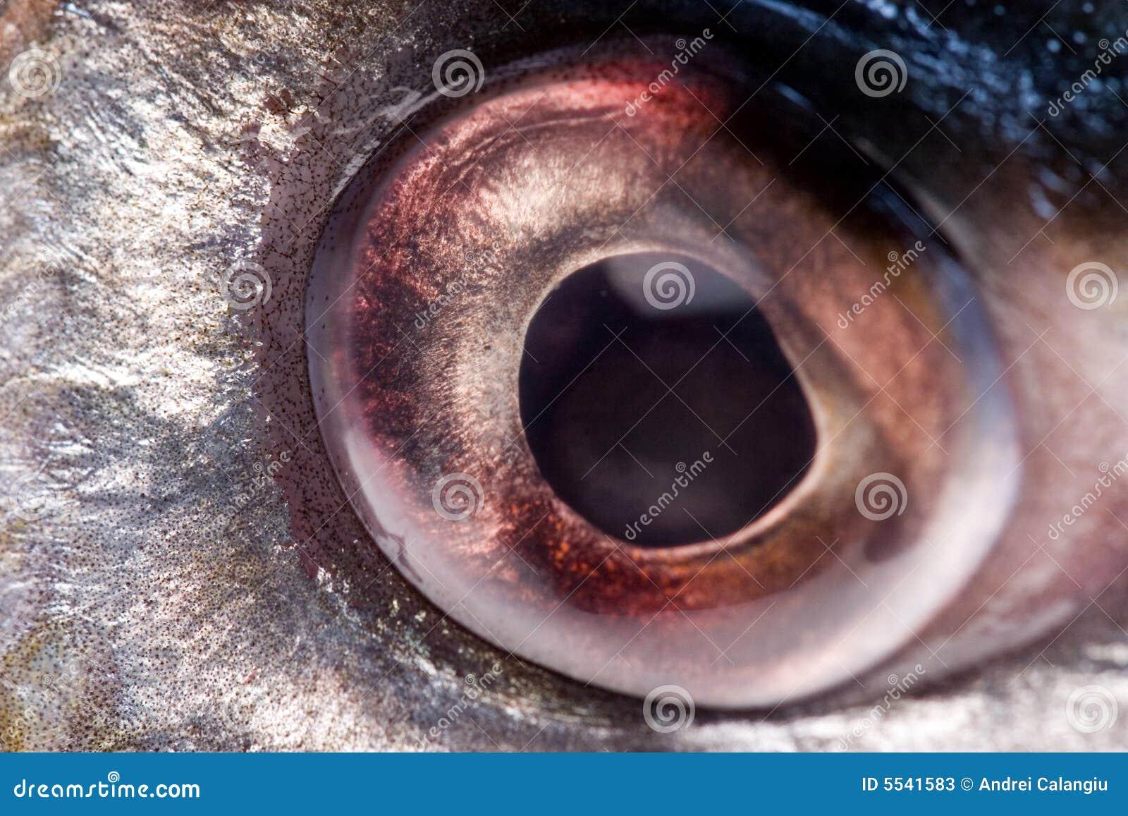 Occhio di pesci