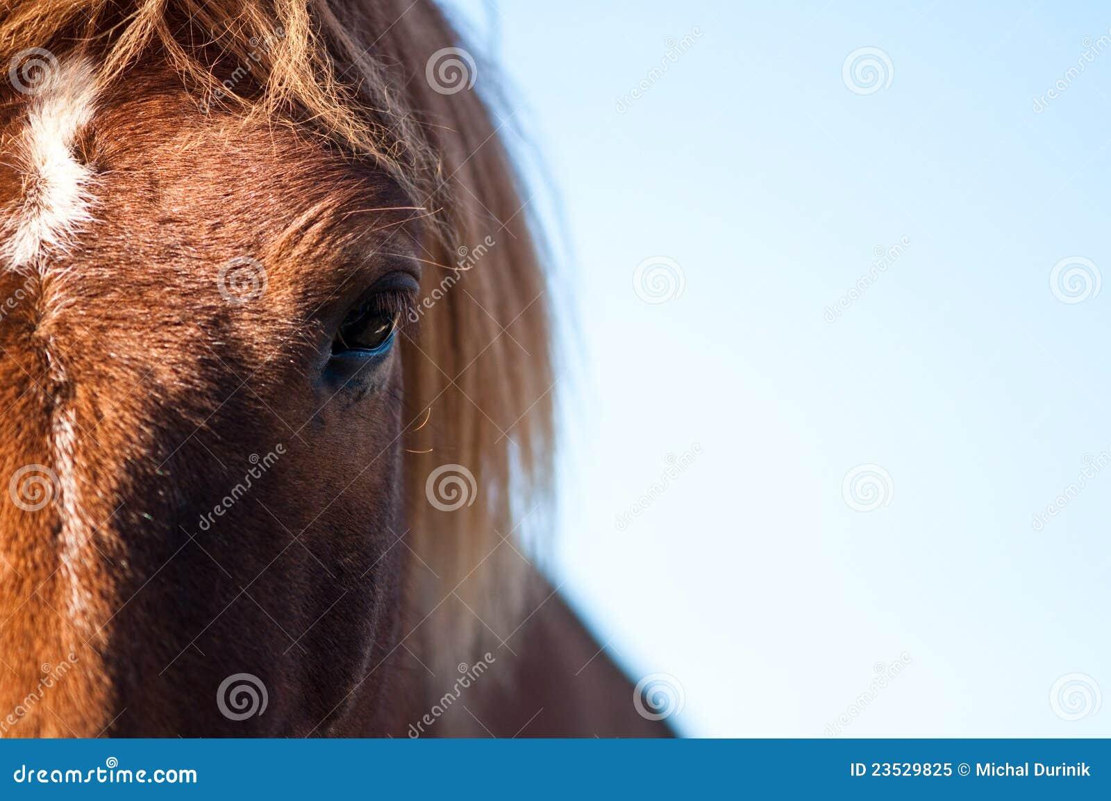 Occhio di un cavallo