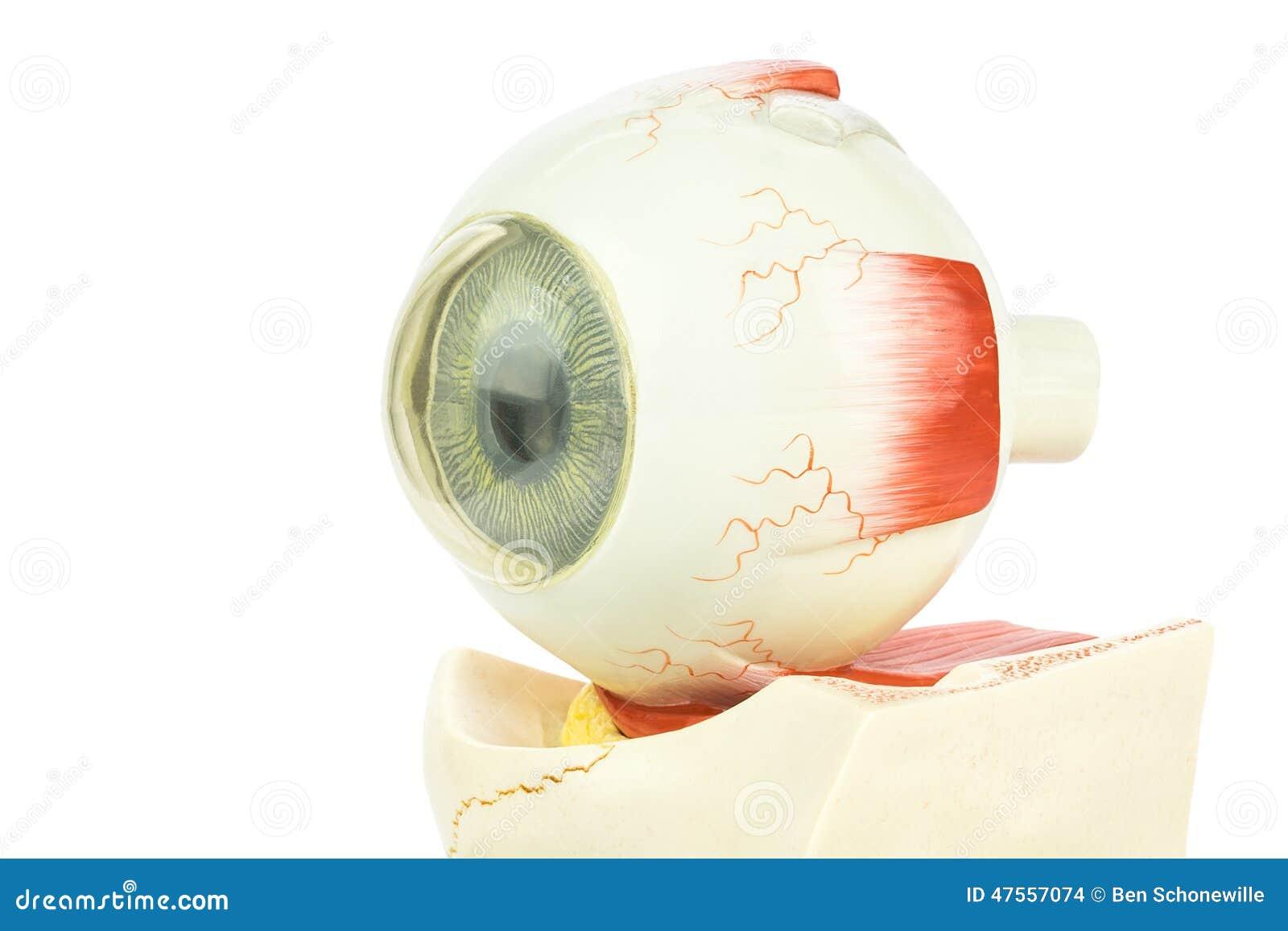 Occhio umano artificiale