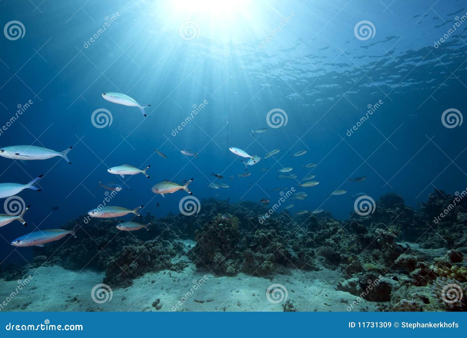 Oceaan en vissen