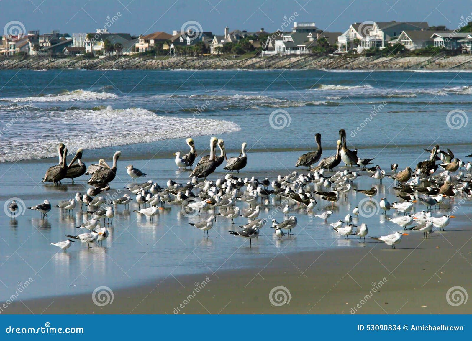 Oceaan het Strandvogels van het Oeverlandschap