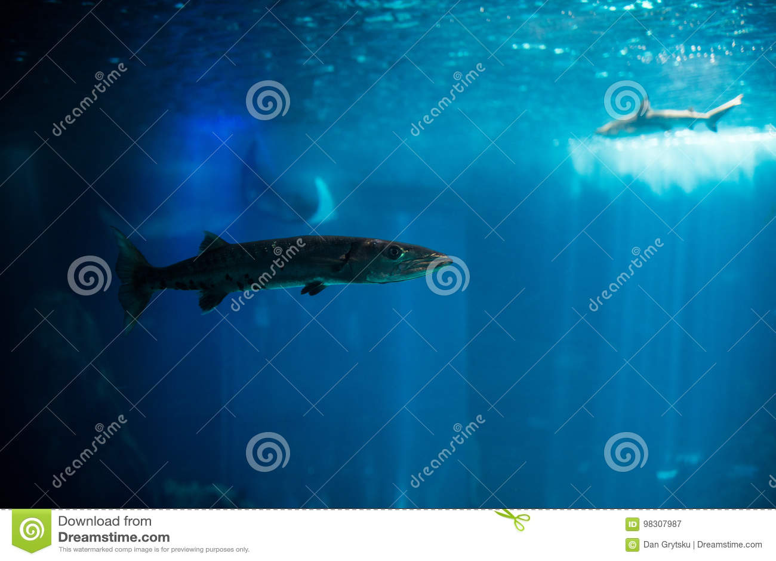 Ocean big fish in a large aquarium tank. Lisbon aquarium.