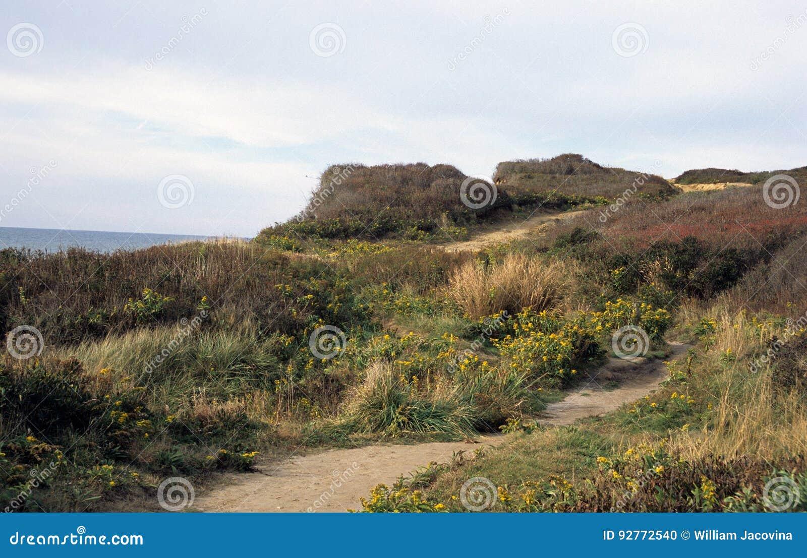Ocean Bluff Trail