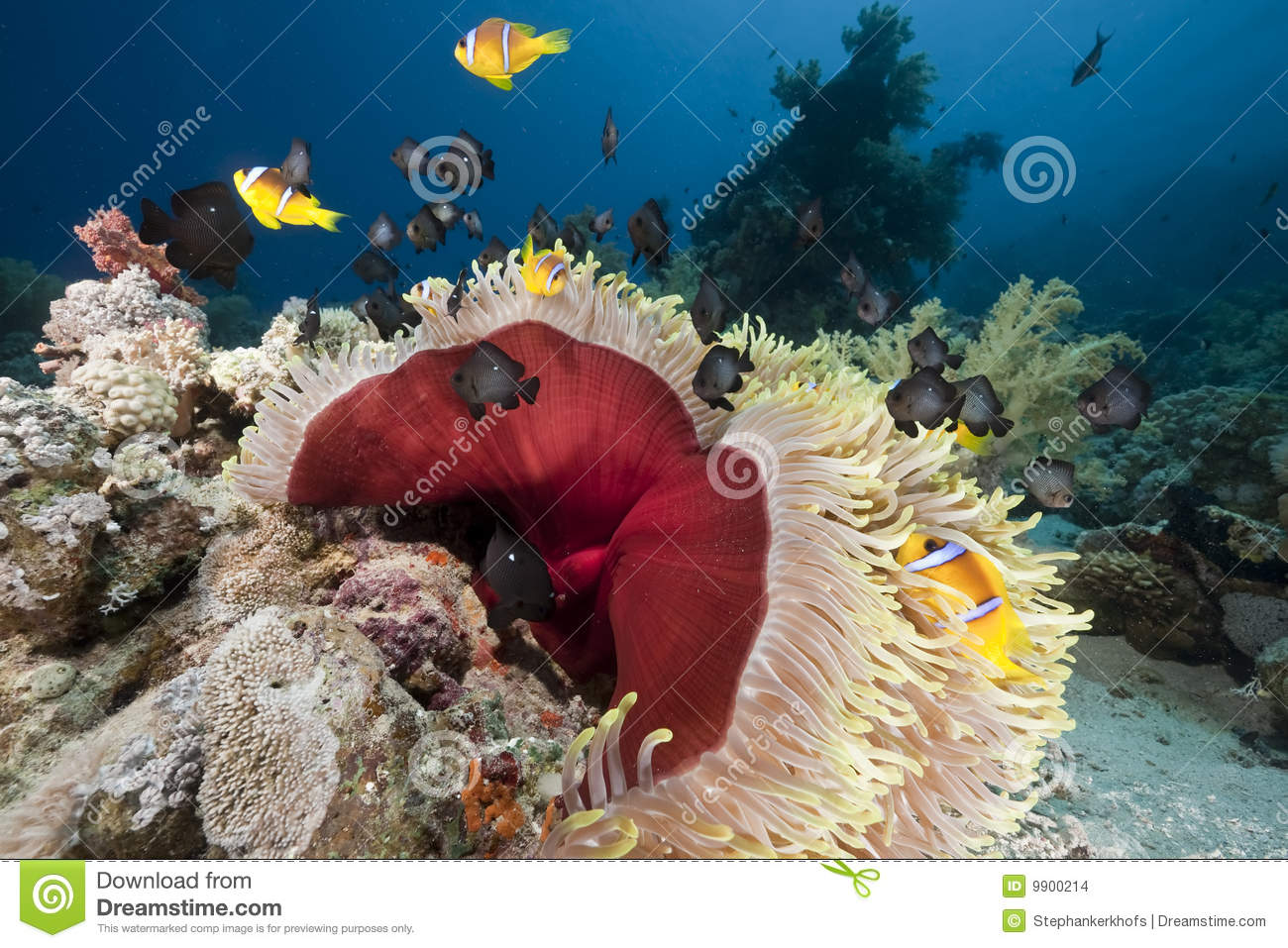 Ocean, coral and anemone