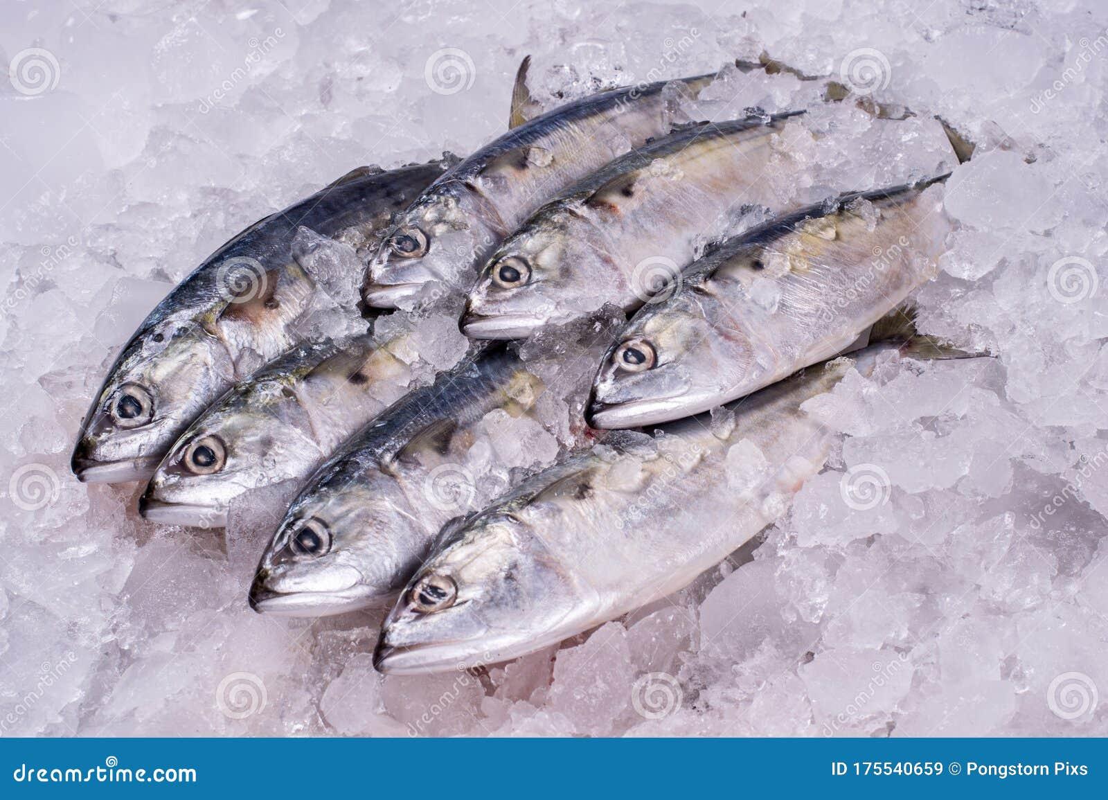 Ocean Fish Fresh Frozen Raw Material Stock Image
