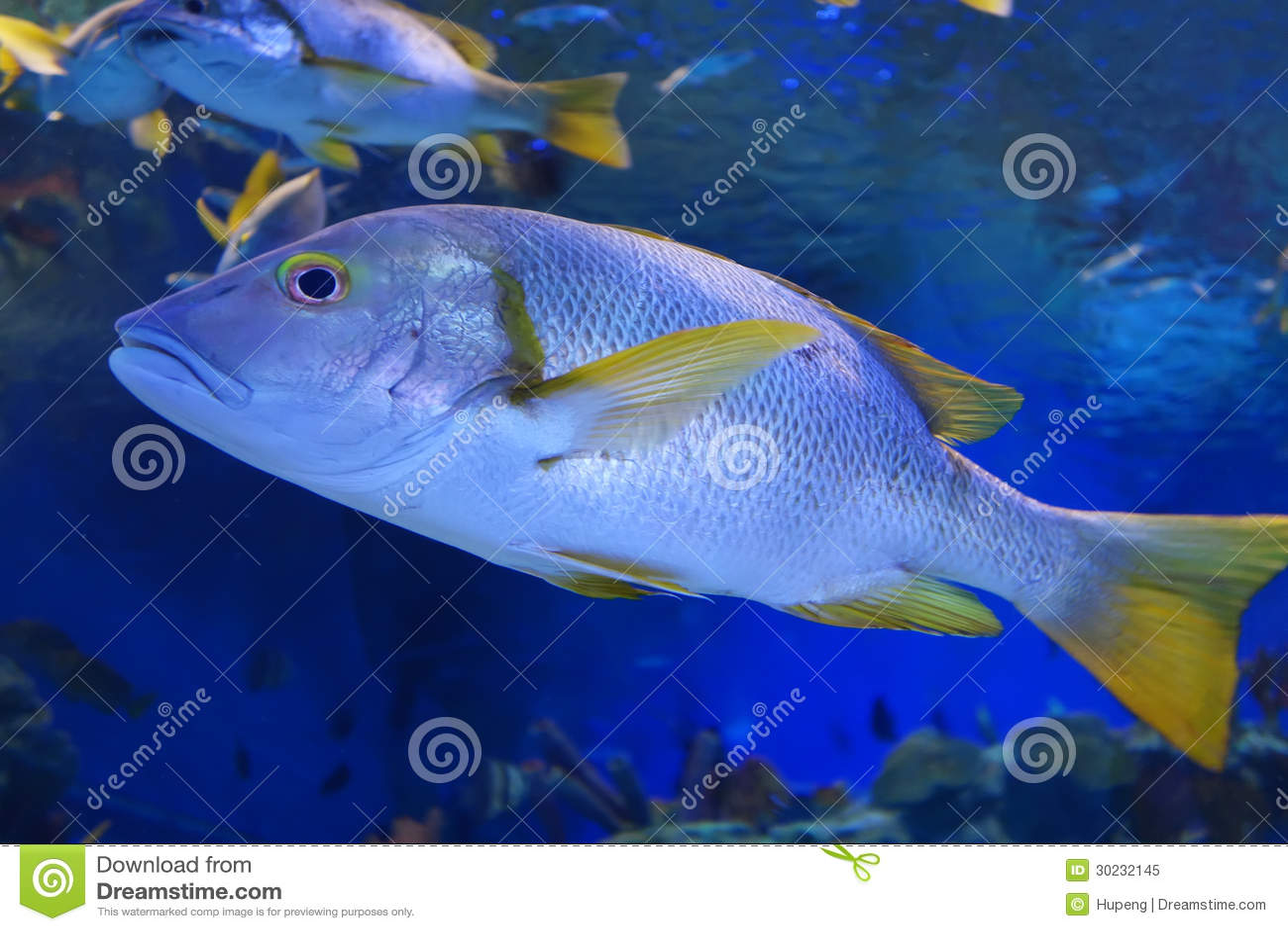 Ocean fish royalty free stock photo image 30232145 for Sea water fish
